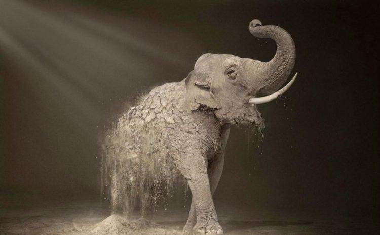 slon koji nestaje